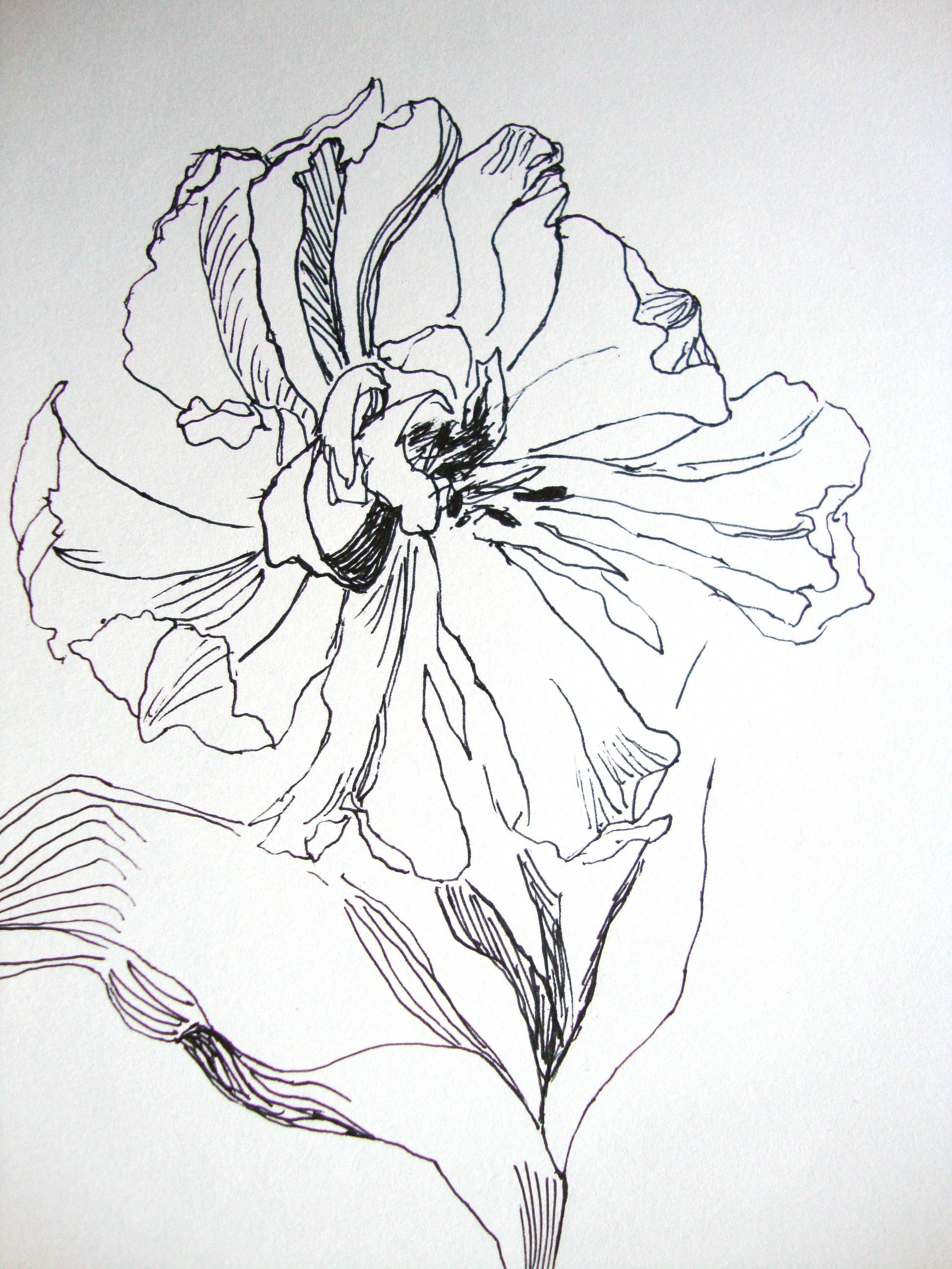 aufgebl hte tulpe m helos zeichnen mit martina wald. Black Bedroom Furniture Sets. Home Design Ideas