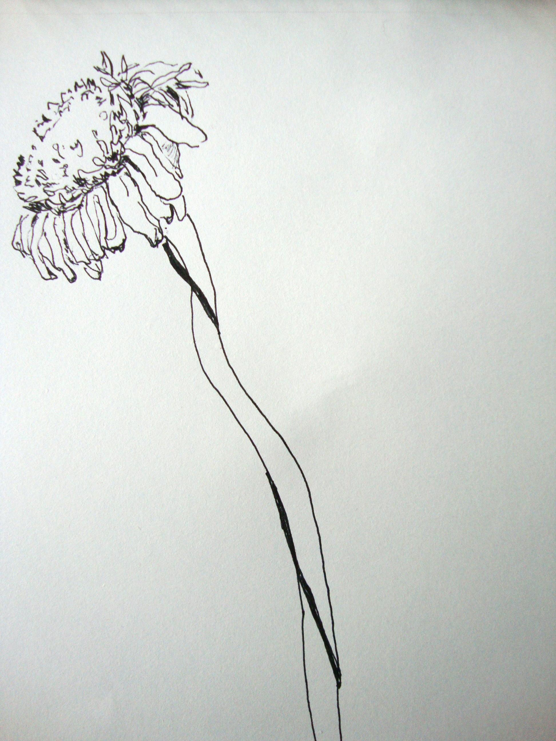 blume zeichnen mit martina wald seite 23. Black Bedroom Furniture Sets. Home Design Ideas