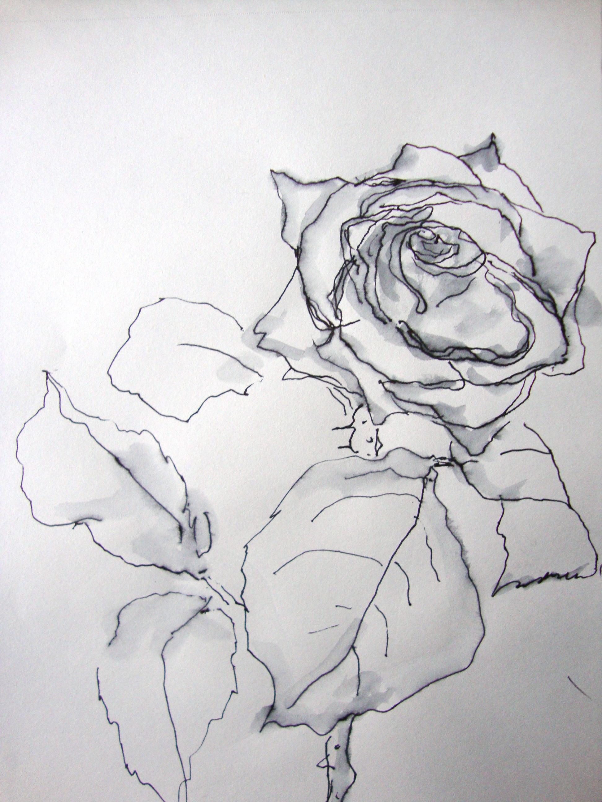 roseroseroseroserose zeichnen mit martina wald. Black Bedroom Furniture Sets. Home Design Ideas