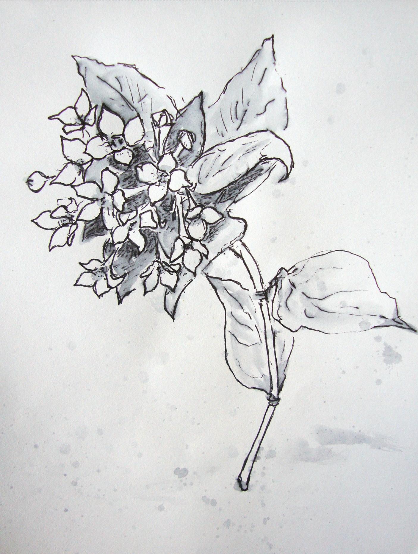 Blume Habe Wieder Vergessen Nach Dem Namen Zu Fragen Zeichnen