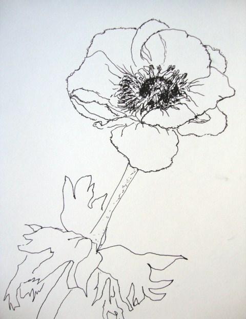 anemone nr 8 zeichnen mit martina wald. Black Bedroom Furniture Sets. Home Design Ideas
