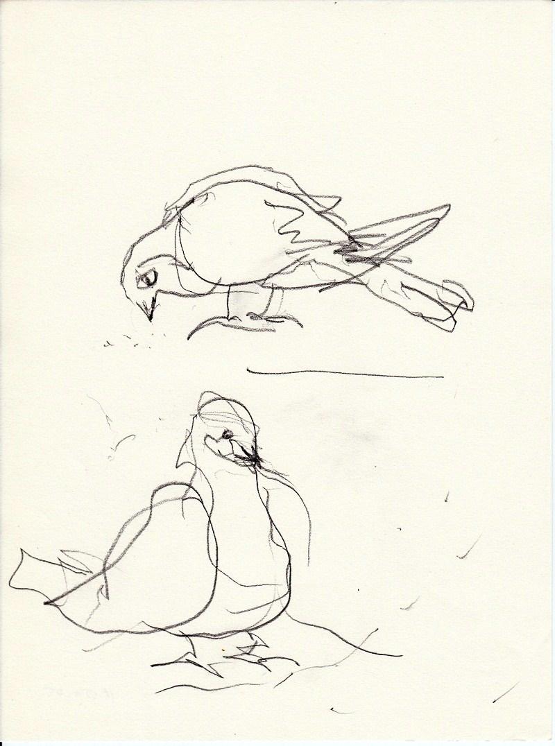 Tiere | zeichnen mit Martina Wald