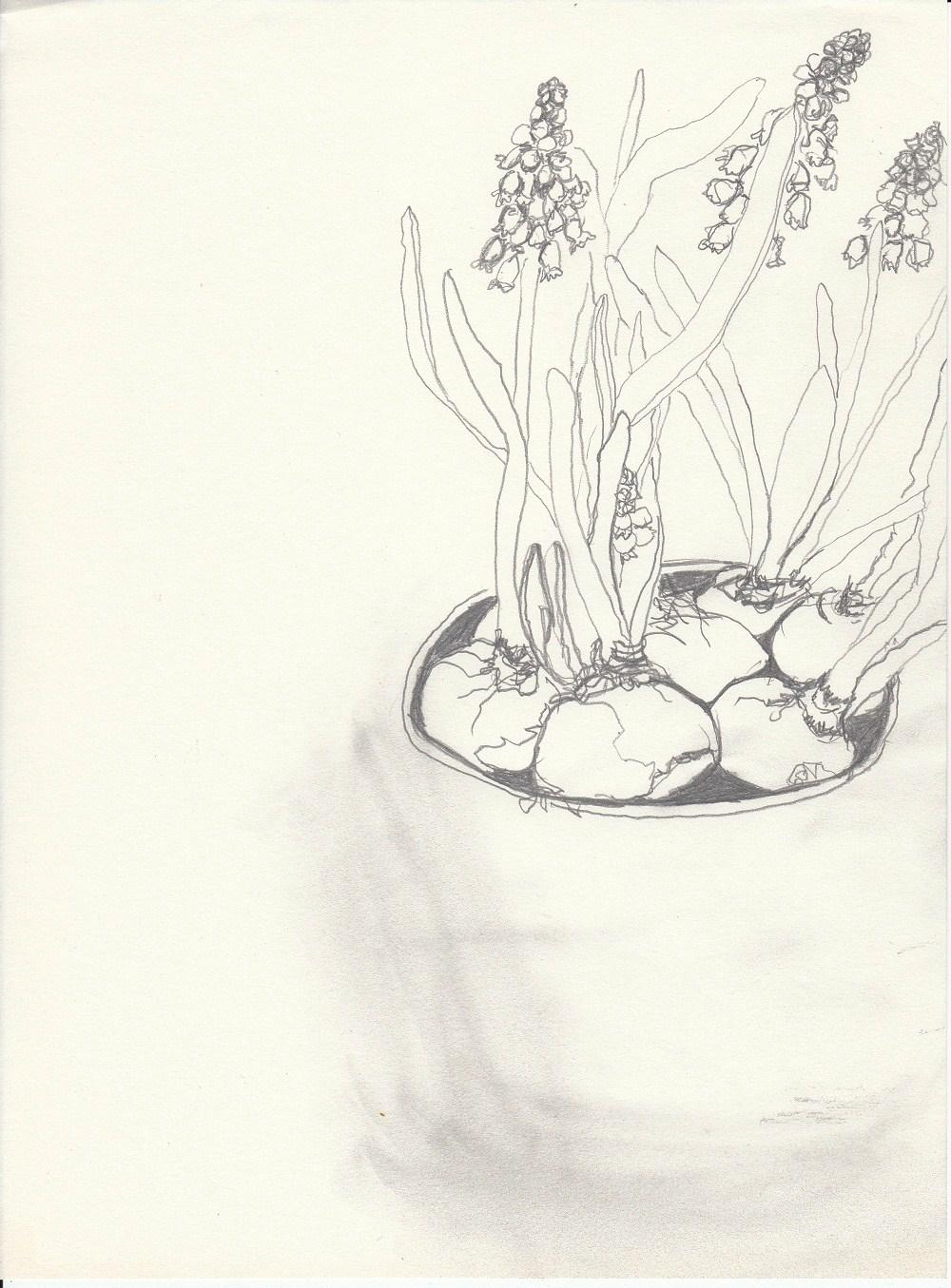 traubenhyazinthe zeichnen mit martina wald. Black Bedroom Furniture Sets. Home Design Ideas
