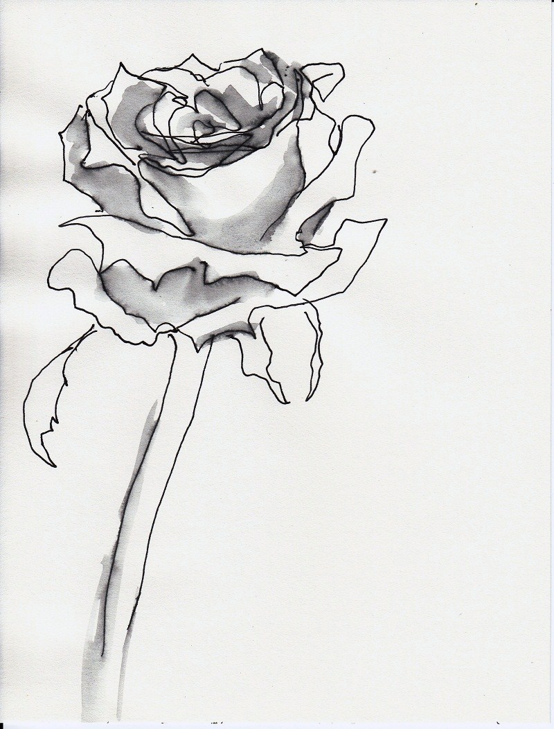 rose nr 56 zeichnen mit martina wald. Black Bedroom Furniture Sets. Home Design Ideas