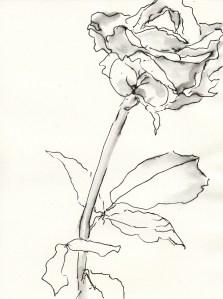 Rose Nr. 66