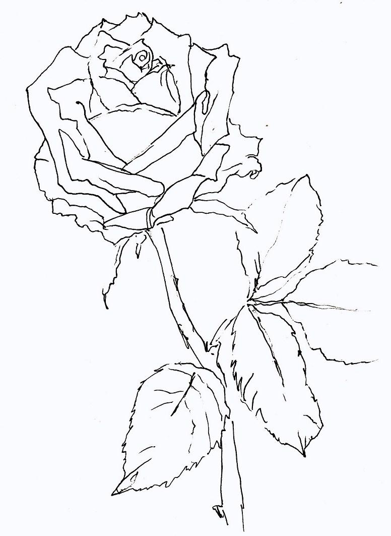 rose nr 63 zeichnen mit martina wald. Black Bedroom Furniture Sets. Home Design Ideas