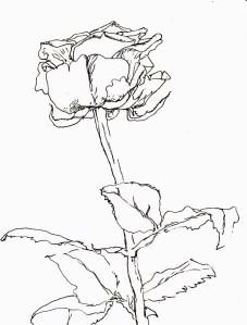 Rose76