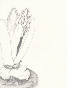 Hyazinthe Bleistift