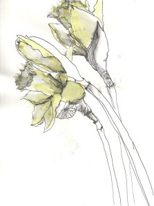 gelbe Narzissen