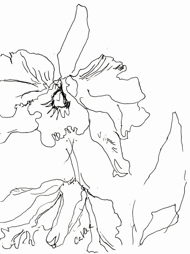 besuch bei prof sch n auf der madeira orchid farm in funchal zeichnen mit martina wald. Black Bedroom Furniture Sets. Home Design Ideas