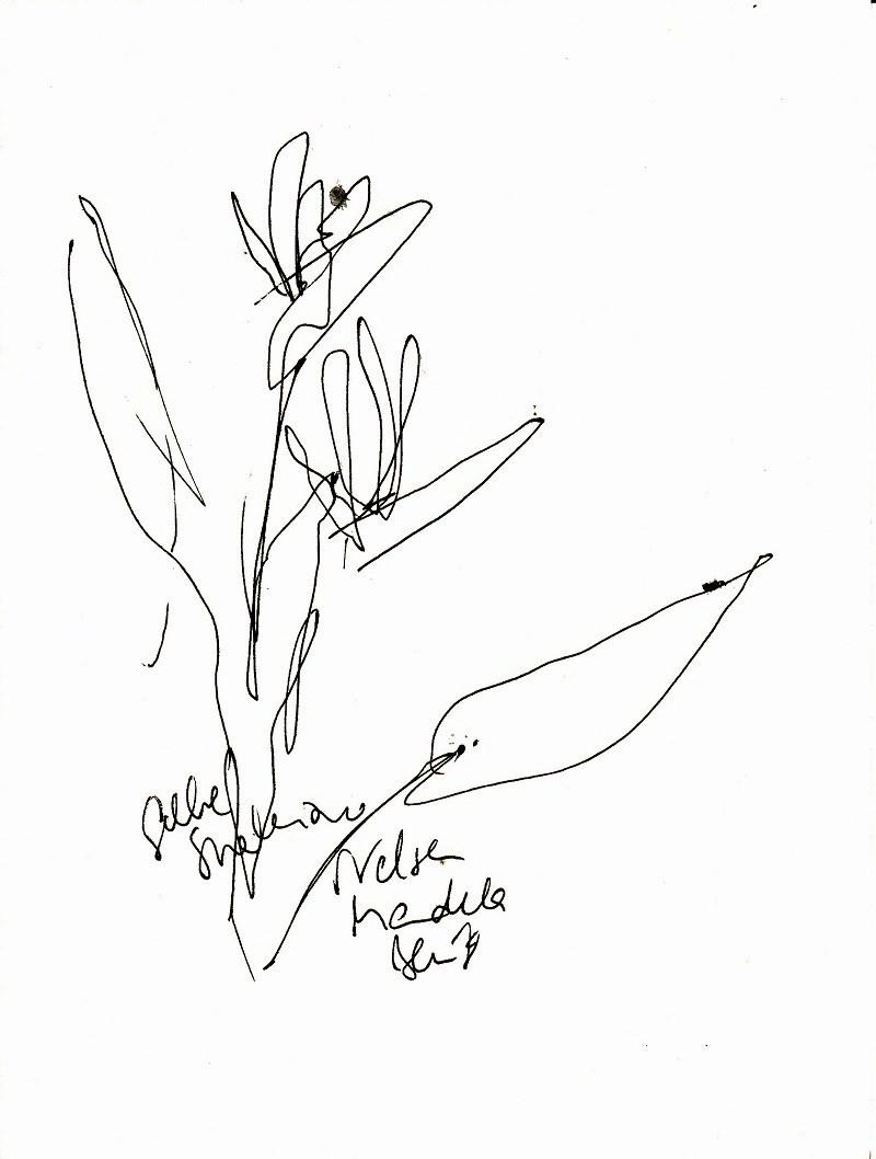 Strelizie | zeichnen mit Martina Wald
