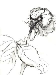 Rose 91