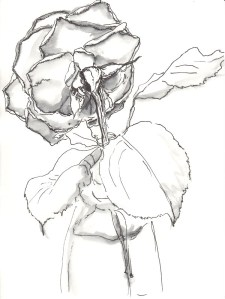 Rose 93