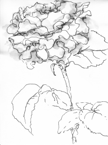 Rose 96