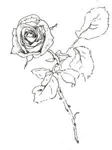 Rose Nr. 99