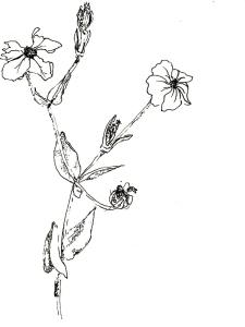 Blumen im Garten 2