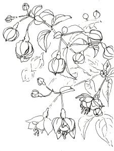 Blumen im Garten 4