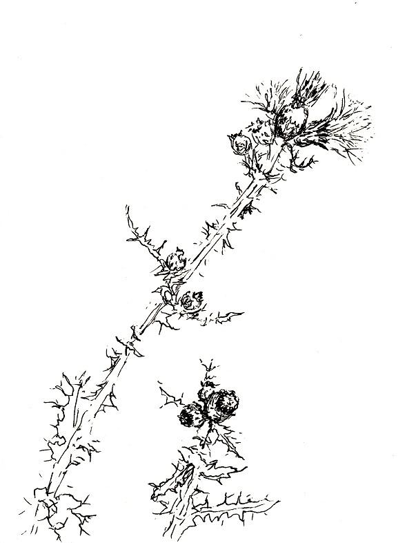 Verwilderter garten distel zeichnen mit martina wald - Garten zeichnen ...