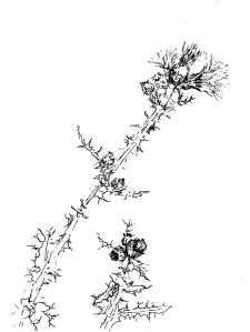Blumen im Garten 5