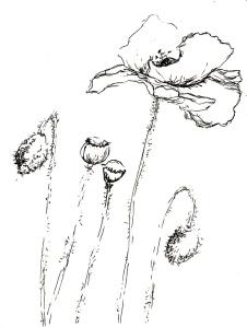 Blumen im Garten 6