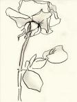 Rose 132