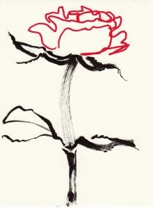 Rose 151 (2)