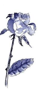 Gabriele Webel Rose 1