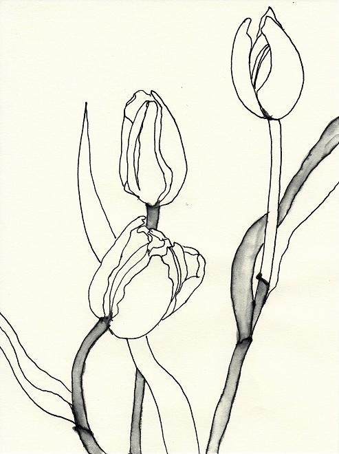 tulpen zeichnen einfach