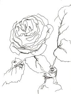 Rose 174