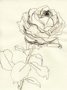 Rose188