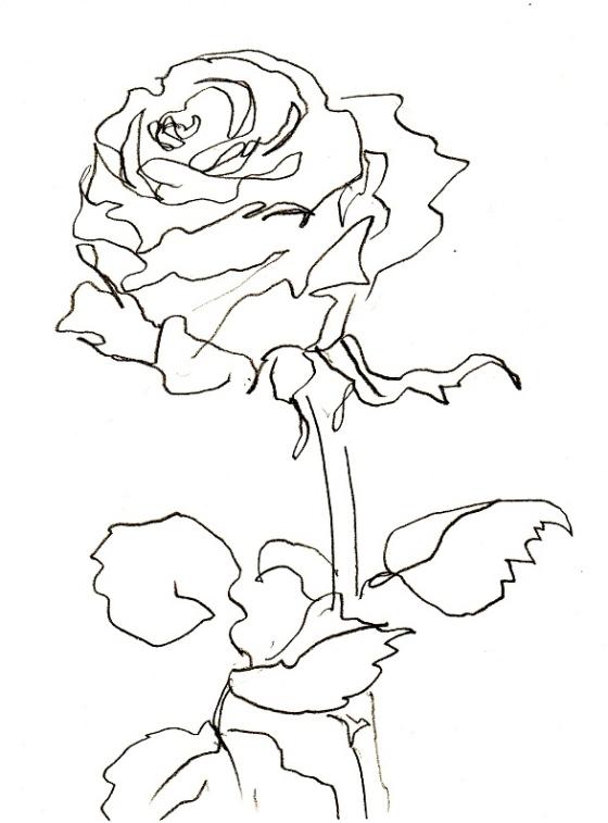 Rose 218