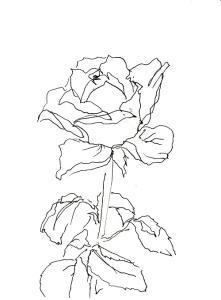 Rose 223