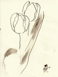 Tulpen9