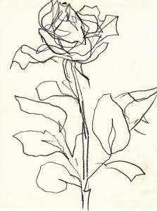 Rose254