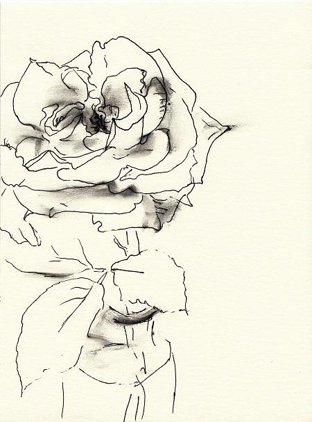 Rose262