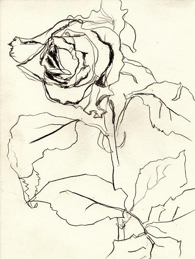 Rose281