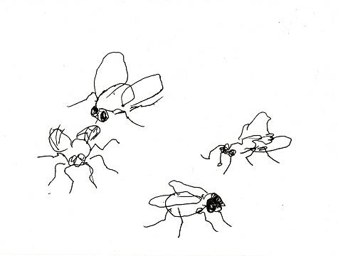 wenn fliegen fliegen zeichnen mit martina wald. Black Bedroom Furniture Sets. Home Design Ideas