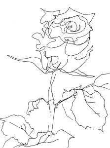 Rose259