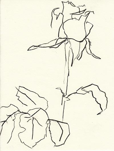 Rose285