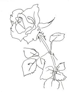 Rose296