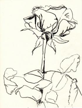 Rose307